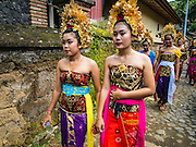 22 JULY 2016 - TENGANAN DUAH TUKAD, BALI, INDONESIA: Young women walk to the pandanus fights in the Tenganan Duah Tukad village on Bali. The ritual Pandanus fights are dedicated to Hindu Lord Indra. Men engage in ritual combat with spiky pandanus leaves and rattan shields. They usually end up leaving bloody scratches on the combatants' backs. The young girls from the community wear their best outfits to watch the fights. The fights have been traced to traditional Balinese beliefs from the 14th century CE. The fights are annual events in the Balinese year, which is 210 days long, or about every seven months in the Gregorian calendar.    PHOTO BY JACK KURTZ