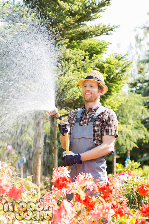 Male gardener watering plants at plant nursery