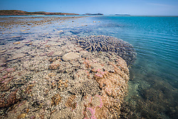 Corals cling to the edge of a sandy reef on Augustus Island at the northern end of Camden Sound.