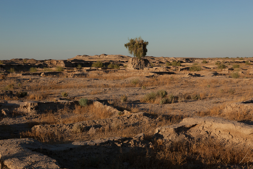 A tree stands at the height of the ground before excavation of the Gonur Depe archaeological site, Turkmenistan