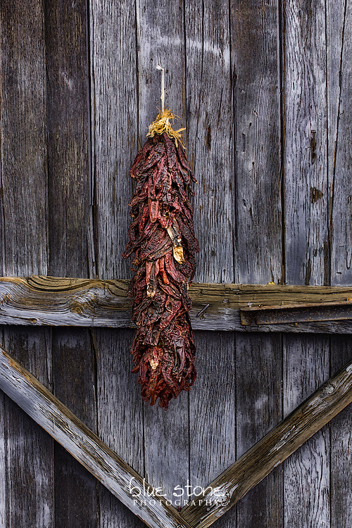 A traditional red chili riastra hanging on a faded blue wood door that is an iconic symbol of the American southwest.<br />