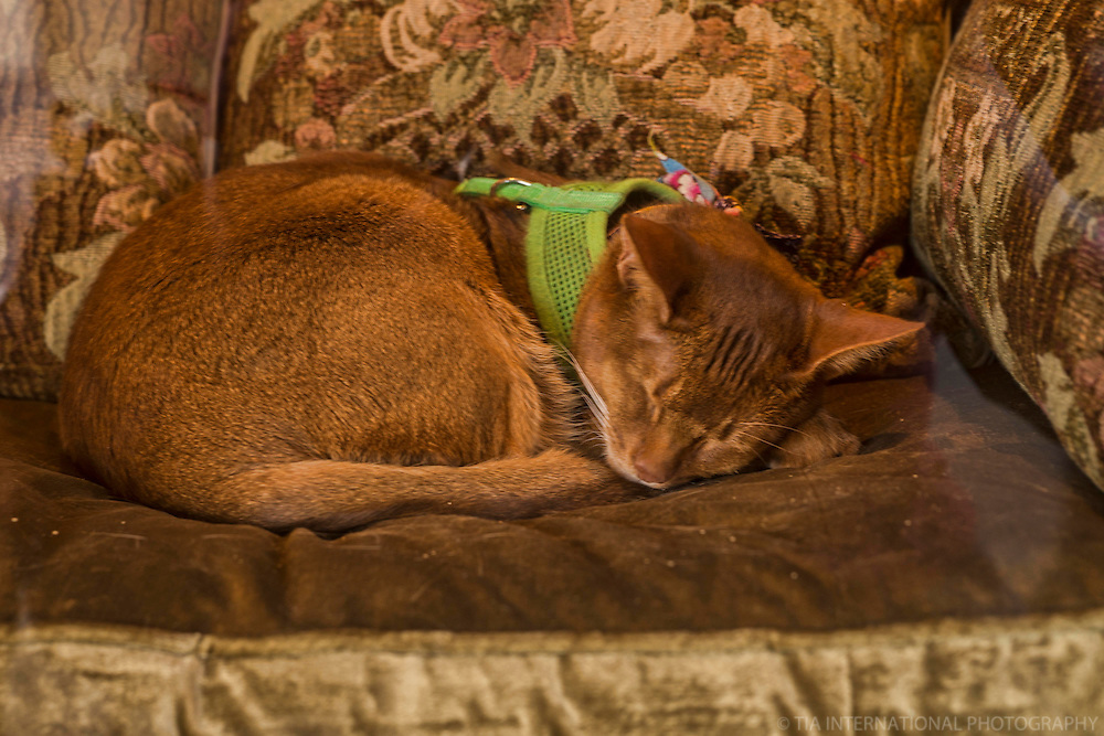 "JUNE 12th:  ""Soft kitty. Warm kitty. Little ball of fur. Happy kitty. Sleepy kitty. Purr Purr Purr…"""