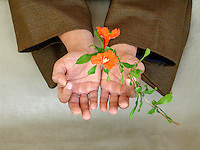 Right action is completely new<br /> born in an untouched presence<br /> unfolding into infinity.&quot; -Elena Ray<br /> <br /> Asian man's hand holding blossoms