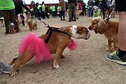 20180908/ Nicolas Celaya - adhocFOTOS/ URUGUAY/ MONTEVIDEO/ PARQUE BATLLE/ Primera edici&oacute;n de &ldquo;Pet Run&rdquo;, en el Parque Batlle, Montevideo.<br /> En la foto: Primera edici&oacute;n de &ldquo;Pet Run&rdquo;, en el Parque Batlle, Montevideo. Foto: Nicol&aacute;s Celaya /adhocFOTOS