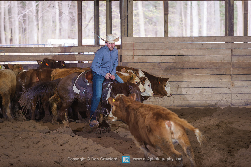 April 29 2017 - Minshall Farm Cutting 1, held at Minshall Farms, Hillsburgh Ontario. The event was put on by the Ontario Cutting Horse Association. Riding in the 2,000 Limited Rider Class is James Cook on Dual Peps Tim Cat owned by the rider.