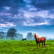 Extraordinary scene with golden mane horse on a fresh green meadow at spring