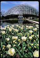 White tulips blossom in front of the Climatron building in April at the Missouri Botanical Garden in St. Louis, Missouri