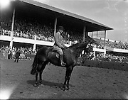 "04/08/1960<br /> 08/04/1960<br /> 04 August 1960<br /> R.D.S Horse Show Dublin (Thursday). The Well Known Dunboyne (Co. Meath) exhibitor, Mr N. Galway-Greer had a remarkable run of successes at the Horse Show. He set a new record when his five-year-old gelding ""Superb"" won the perpetual champion cup for the best hunter in the show. This was the seventh time he had won the award.<br /> Picture shows ""Superb"" S. Pennyfair by Penny Royal, ridden by Mr J. Gittens, winner of the Champion Hunter Award, the Joseph Widger Trophy."