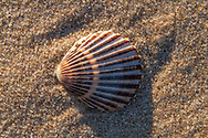 Georgica Beach, East Hampton, NY