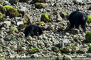 Wildlife photography from Archipelago Wildlife Cruise, British Columbia, Canada