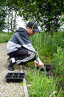 young man planting native flowers in wildlife garden