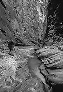 Photographer next to stream photographing deep slot canyon, Orderville Canyon, Zion National Park, MR, © 1999 David A. Ponton