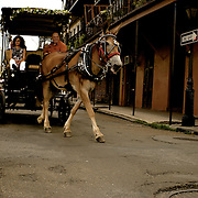 Leaving their wedding ceremony, the wedding party joins the newly weds on a carriage ride through the streets of New Orleans before the celebration.