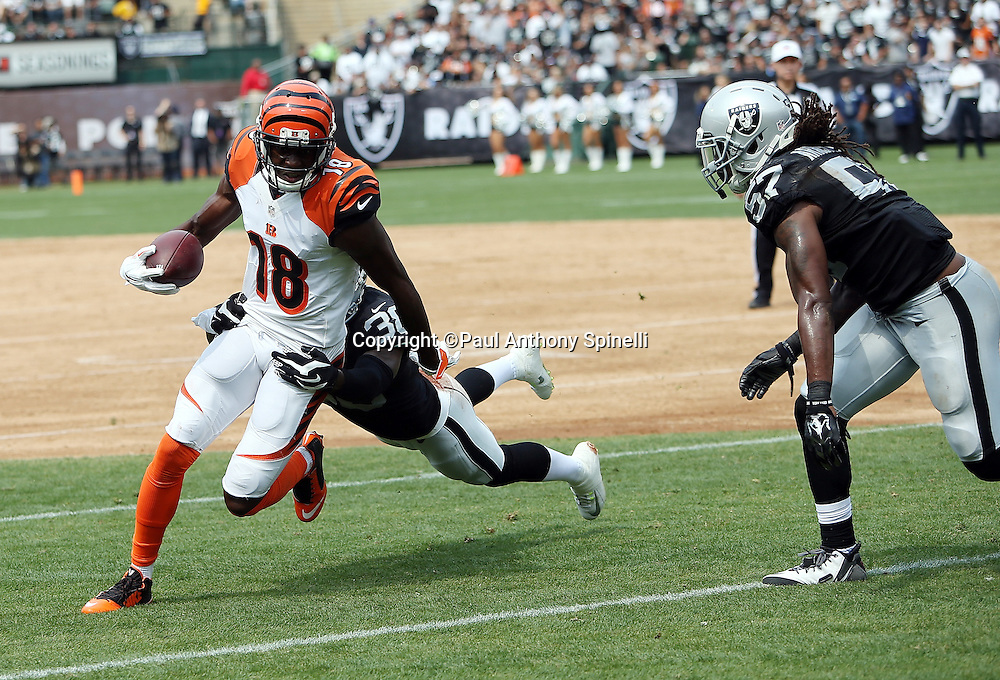 Cincinnati Bengals wide receiver A.J. Green (18) catches a second quarter pass and gets tackled by Oakland Raiders cornerback T.J. Carrie (38) during the 2015 NFL week 1 regular season football game against the Oakland Raiders on Sunday, Sept. 13, 2015 in Oakland, Calif. The Bengals won the game 33-13. (©Paul Anthony Spinelli)