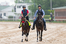 Derby 142 hopeful Nyquist Assistant trainer Jack Sisterson on Satire, right, leads Nyquist with Jonny Garcia up around the track for training, Sunday, May 01, 2016 at Churchill Downs in Louisville.