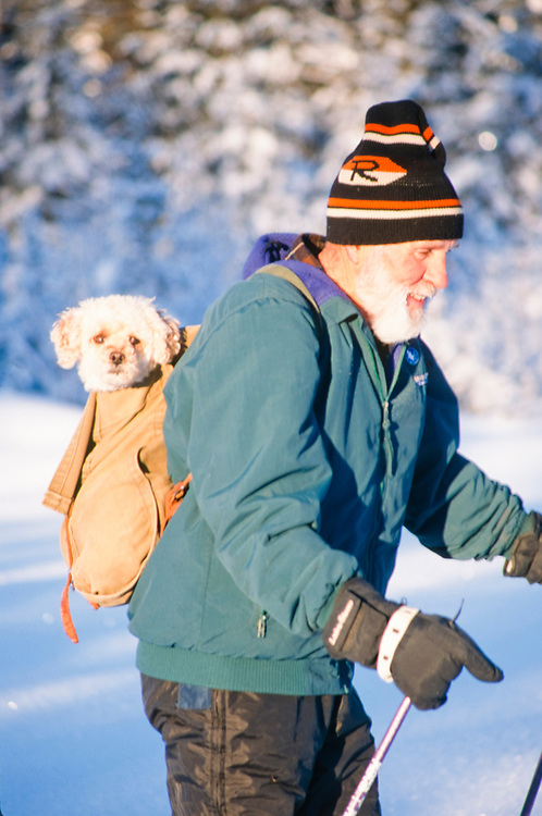 Alaska. Kenai Peninsula. Cross country nordic skier with dog in his backpack.