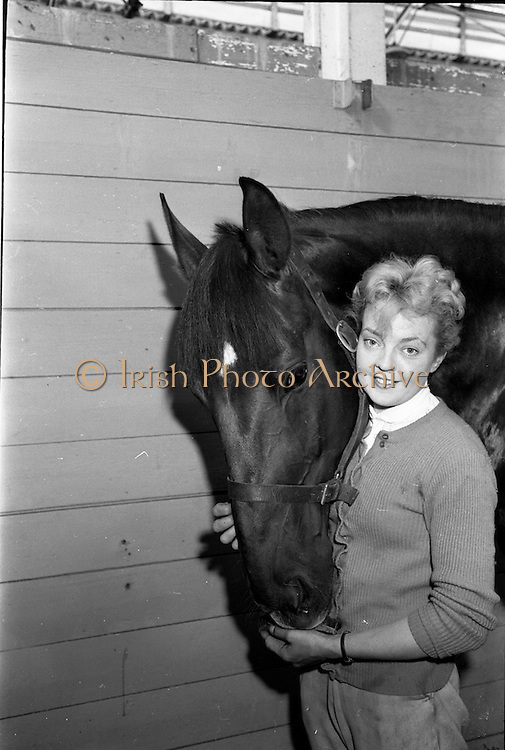 06/08/1962<br /> 08/06/1962<br /> 06 August 1962<br /> Preparations for the Dublin Horse Show at the RDS, Ballsbridge, Dublin.