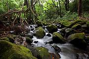 Judd Trail, Nuuanu Valley, Honolulu, Oahu, Hawaii