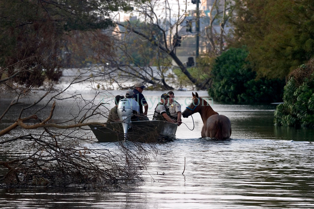 05 Sept  2005. New Orleans, Louisiana. Post hurricane Katrina.<br /> Animal rescue boat. A horse is rescued from the devastating floods in Uptown New Orleans by the Kentucky Dept of Fish and Wildlife Dept.<br /> Photo; &copy;Charlie Varley/varleypix.com