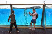 Scène de vie à l'intérieur du Marineland d'Antibes // Woman taking picture with a dolphin in Antibes Marineland park