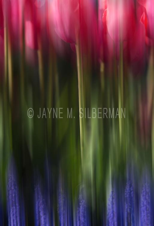 Tulips Artistry.