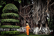 A gardener is douseing the trees in a public garden.