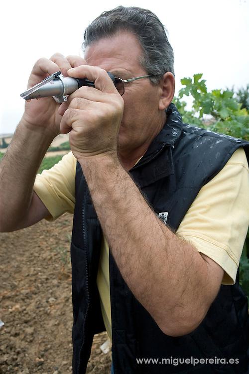 Ribera del Duero wine producer Diego Pe&ntilde;a, checking the acidity of the grapes in october.<br /> <br /> El vinicultor Diego Pe&ntilde;a comprueba la acidez de una uva en sus vi&ntilde;edos, en el mes de Octubre.