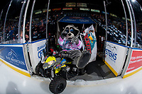 KELOWNA, CANADA - FEBRUARY 17: Rocky Raccoon, the mascot of the Kelowna Rockets enters the ice against the Edmonton Oil Kings  on February 17, 2018 at Prospera Place in Kelowna, British Columbia, Canada.  (Photo by Marissa Baecker/Shoot the Breeze)  *** Local Caption ***