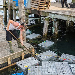 Ryan Schultz moves bins of lobsters at the Friendship Lobster Co-op in Friendship, Maine.