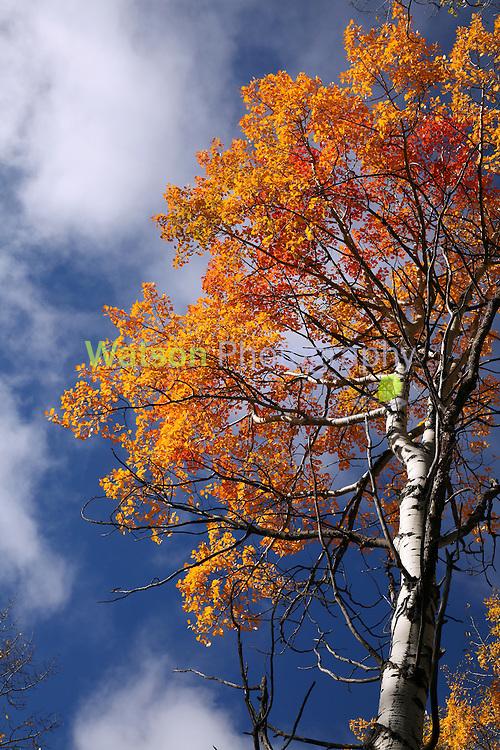 Autumn Flames 2_2016_Heidi Watson
