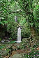 Juan Diego creek
