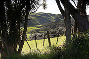 a typical rural scene through the trees, over the wire fence to the rolling hills and green fields of Awhitu, Auckland Region, New Zealand