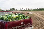 Modern Farmer Magazine - Organic farming in Baja Mexico