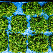 Mounds of river weed for sale at a roadside market in Luang Namtha, Laos.