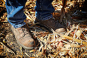 Minnesota corn harvest, farmer standing in corn chaff, close-up, boots