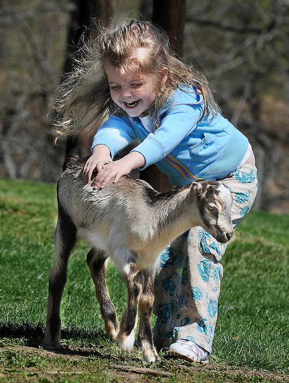 "Three-year old Jordanna Gasparini of Monkton throws herself.into Ag Day at Hereford High School and gives a three-week old.""La Mancha"" kid goat a two-handed pet with lots of laughter too.."