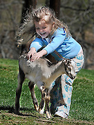 """Three-year old Jordanna Gasparini of Monkton throws herself.into Ag Day at Hereford High School and gives a three-week old.""""La Mancha"""" kid goat a two-handed pet with lots of laughter too.."""