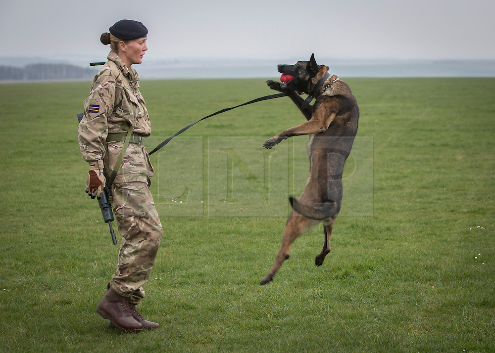 26/03/2014.  Corporal Kelly Wolstencroft (28) from Manchester with her military working dog Tran (4) put on a display as the British Army reveal it's new specialist, combat and command skills formation today. This new part of the Army will be made up of 36000 Regular and Reserve soldiers, which is a third of the army as a whole and supports the logistics of operations both in the UK and abroad.  The command will officially launch on the 1 Apr 14.  Alison Baskerville/LNP