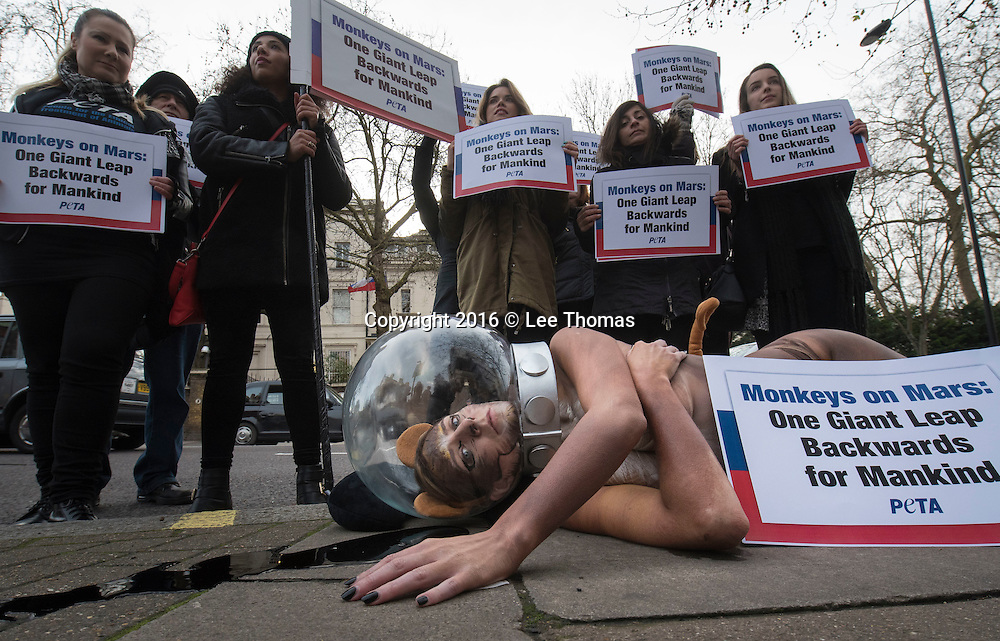 "Russian Embassy, Bayswater Road, London, UK. 13th January, 2016. London, UK. Adult-film star Samantha Bentley, also known for her appearance in Game of Thrones, joins a protest held outside the Russian Embassy in London. The TV star wore a space helmet and her body painted to resemble a monkey whilst she lay in a pool of fake blood. The demonstration was held to protest against Russia's plans to send four macaque monkeys to Mars in 2017. Other protesters called on Russia to use ""exclusively high-tech, 21st century space-exploration methods in its space programme – not non-human primates"". Pictured: // Lee Thomas, Flat 47a Park East Building, Bow Quarter, London, E3 2UT. Tel. 07784142973. Email: leepthomas@gmail.com. www.leept.co.uk (0000635435)"