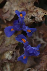 Gorge trip with Coyle to Gladie Creek, Tuesday, April 21, 2015 at Gladie Creek in Red River Gorge.