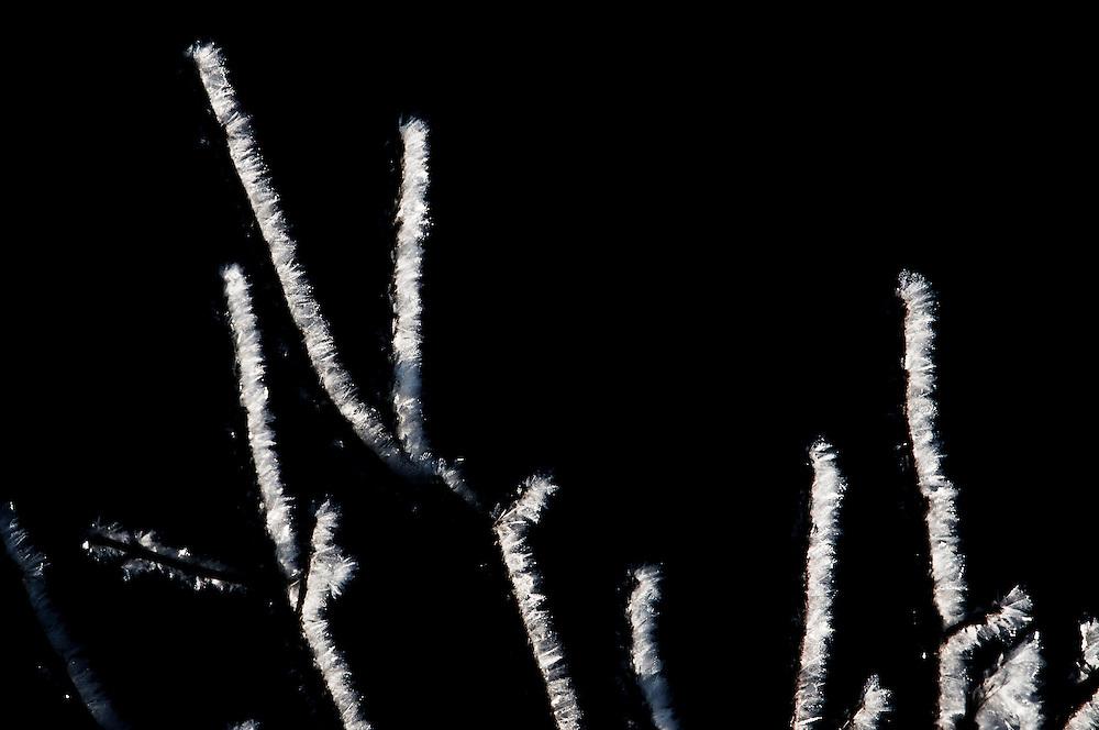 Frost grips tree branches in Saskatchewan.