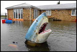 A fake shark head is seen popping through the flooded water as the UK starts to sink. Photo taken on the edge of Wraysbury, UK. Tuesday, 11th February 2014. Picture by Andrew Parsons / i-Images