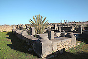 The House of the Nereides, named after a mosaic of sea nymphs, Volubilis, Northern Morocco. Volubilis was founded in the 3rd century BC by the Phoenicians and was a Roman settlement from the 1st century AD. Volubilis was a thriving Roman olive growing town until 280 AD and was settled until the 11th century. The buildings were largely destroyed by an earthquake in the 18th century and have since been excavated and partly restored. Volubilis was listed as a UNESCO World Heritage Site in 1997. Picture by Manuel Cohen