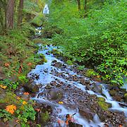 Wahkeena Falls And Lower Stream - Columbia Gorge, Oregon