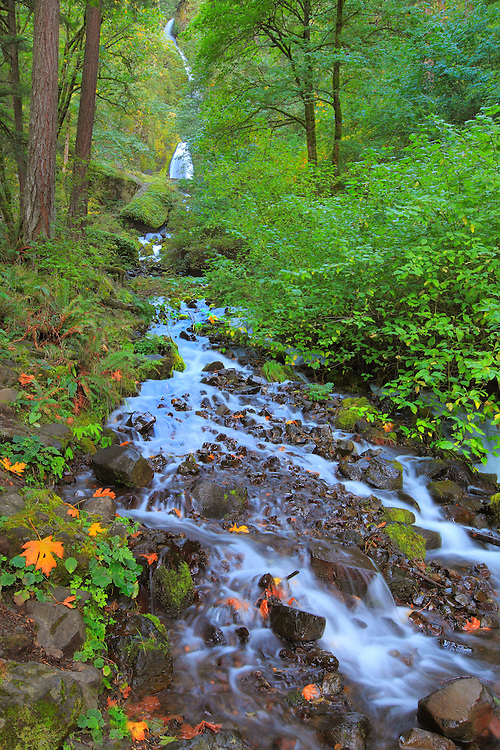 Wahkeena Falls And Lower Stream - Columbia Gorge, Oregon