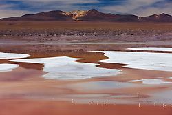 Laguna Colorada; shallow red lagoon containing white borax islands and endangered James flamingos (Phoenicoparrus jamesi), Bolivia,South America