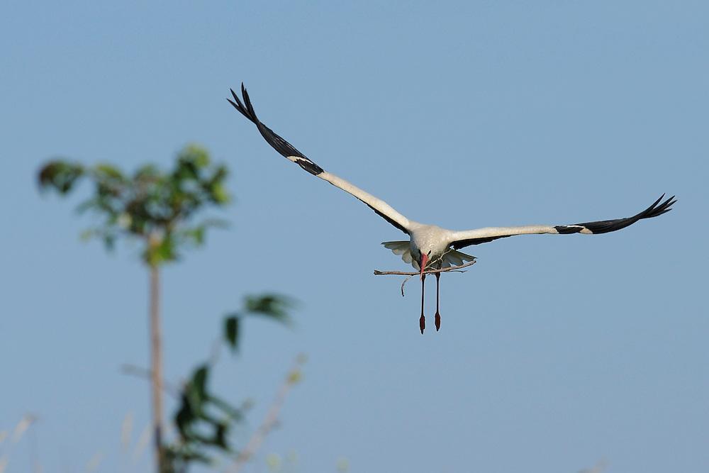 Danube delta rewilding area, Romania