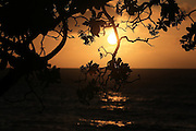Sun setting through the silhouette of leaves & branches on Hawaii's North Shore