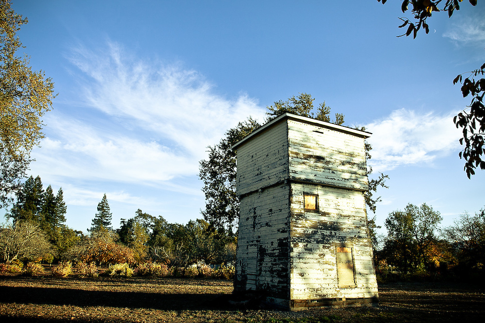 A water tower surrounded by walnut trees.