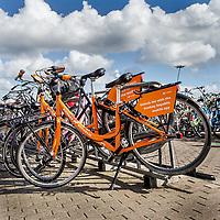 Nederland,Amsterdam, 4 augustus 2017.<br /> De gemeente Amsterdam doet de deelfiets in de ban. Alle deelfietsen die in de openbare ruimte worden verhuurd, worden van straat gehaald, zodat er &quot;plek in het rek is en blijft&quot;, aldus de gemeente.<br /> <br /> De deelfiets kan worden gehuurd door middel van een app. Daarmee betaalt een klant de fiets en wordt die van het slot gehaald. Als de klant hem heeft gebruikt, kan hij hem overal wegzetten.<br /> <br /> En dat levert frustratie op, omdat schaarse fietsplekken onnodig bezet worden. &quot;We zijn hard aan het werk om meer plek voor de fietser te realiseren en die willen we niet door de vele commerci&euml;le deelfietsen laten innemen&quot;, zegt wethouder Litjens.<br /> <br /> Paal en perk stellen<br /> <br /> De afgelopen tijd is er in de stad een wildgroei aan nieuwe bedrijfjes die de deelfiets aanbieden. Het concept zou eigenlijk het aantal fietsen in de stad moeten verminderen, maar het werkt averechts, concludeert de wethouder. &quot;Tot nu toe lijken het er alleen maar meer te worden, daar willen we paal en perk aan stellen.&quot;<br /> <br /> Volgens de gemeente is het ook wettelijk niet toegestaan om de openbare ruimte als uitgifteplek voor de fietsen te gebruiken. De bedrijven moeten nog op de hoogte worden gesteld van de nieuwe aanpak. De gemeente wil met de bedrijven nadenken over hoe de parkeerdruk door middel van de deelfietsen wel kan worden verminderd.<br /> <br /> <br /> <br /> Foto: Jean-Pierre Jans